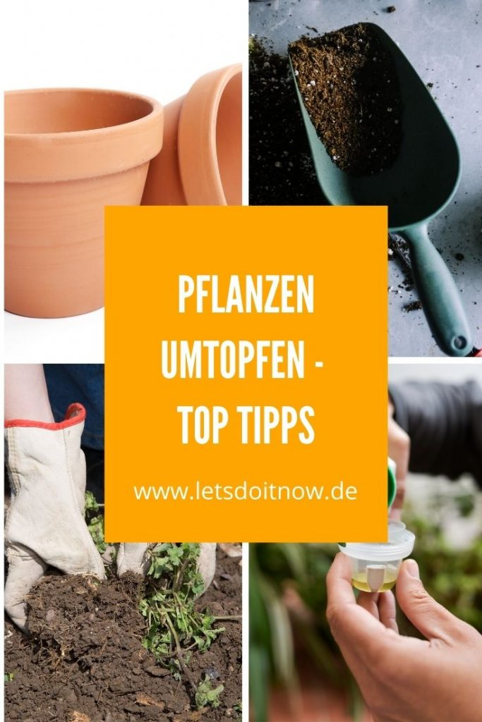 Pflanzen umtopfen - Top Tipps