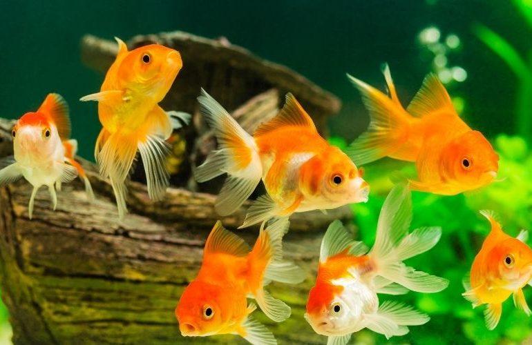 Aquarium für Anfänger kaufen